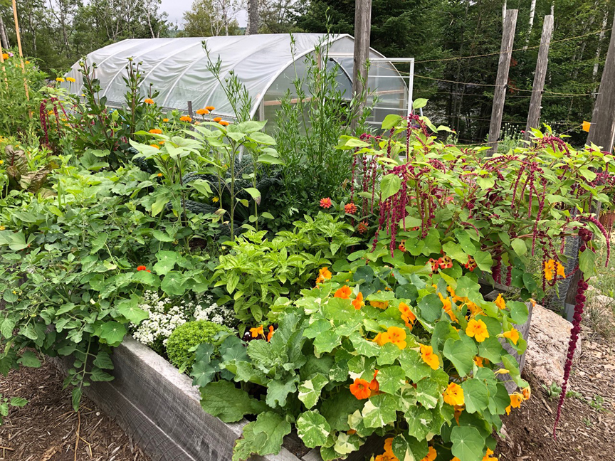 Niki Jabbour is an expert at growing plants year round even in Nova Scotia. Her poly tunnel has also become an integral part of the summer garden.