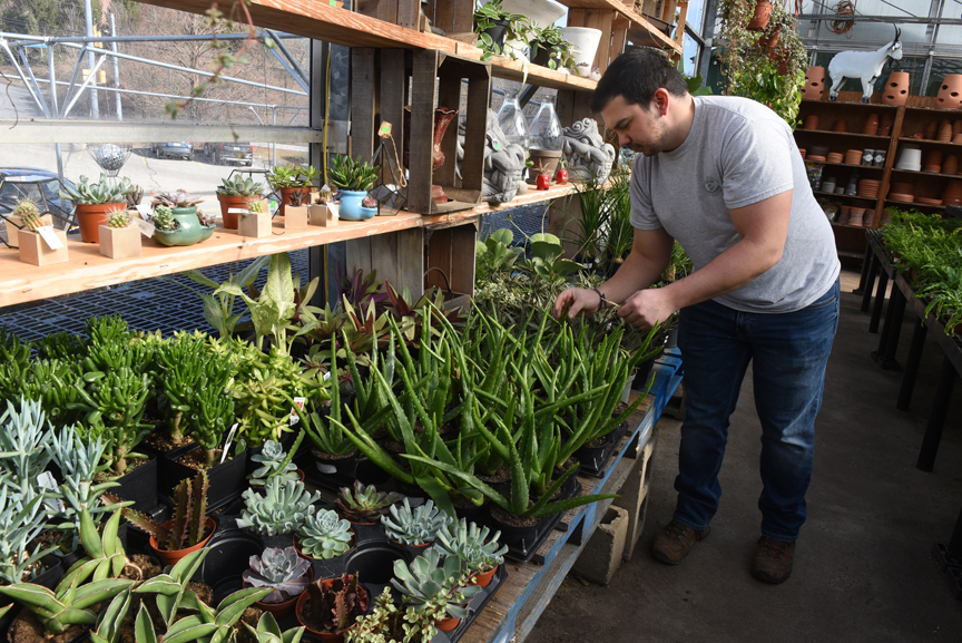 Randy Potter, a general manager at Soergel's Garden Center in Wexford looks over a large area filled with succulents.