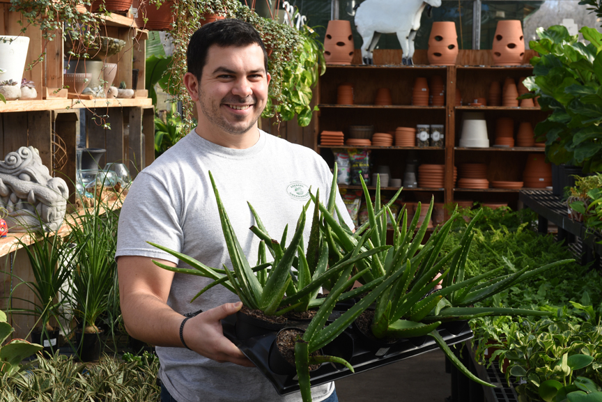 Succulents like aloe are easy to grow on the windowsill. These are on display at Soergel's Garden Center in Wexford. Randy Potter, a general manager at the nursery has lots of tips on how to grow succulents indoors.