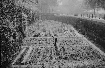 This photo was on display at the Tower of London when Everybody Gardens editor Doug Oster visited. It showed a victory garden in the moat during WWII.